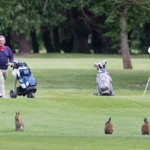 20160616_Shannon_Chamber_Golf_Classic_2016_0480
