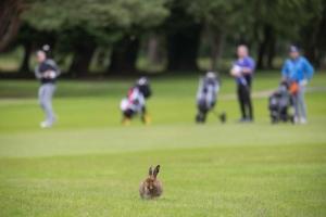20170615_Shannon_Chamber_Golf_2017_0540