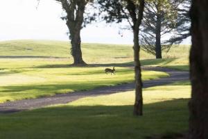 20210909_Shannon_Chamber_Golf_Classic_0516